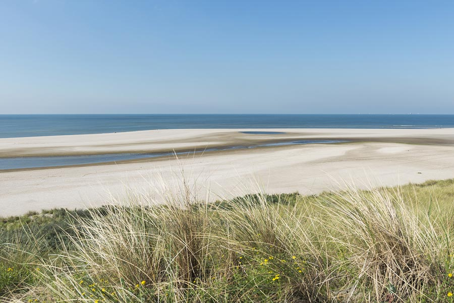 Beach and blue sky with some dune plants at Maasvlakte near Rotterdam